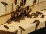 Project Bee - Projekt pčele