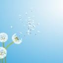 De wind als symbool van de Geest van God. De wind die voor nieuw leven zorgt. De wind die verspreid. Zo worden ook de woorden van God via de Heilige Geest (die in Zijn kinderen woont) verspreid over de hele wereld.