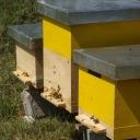 derde-bijenvolk-kroatie-kinderclub