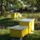 Bijenproject-9kasten-4