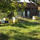 Bijenproject-9kasten-6