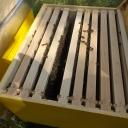 Bijenproject-Kroatie8415-leeuwenbende