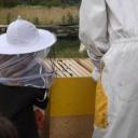 Bijenproject-Kroatie8410-leeuwenbende