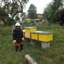 Bijenproject-Kroatie8381-leeuwenbende