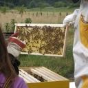 Bijenproject-Kroatie8403-leeuwenbende
