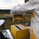Bijenproject-Kroatie8406-leeuwenbende