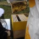 Bijenproject-Kroatie8407-leeuwenbende