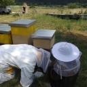 Bijenproject-Kroatie8385-leeuwenbende
