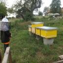 Bijenproject-Kroatie8379-leeuwenbende